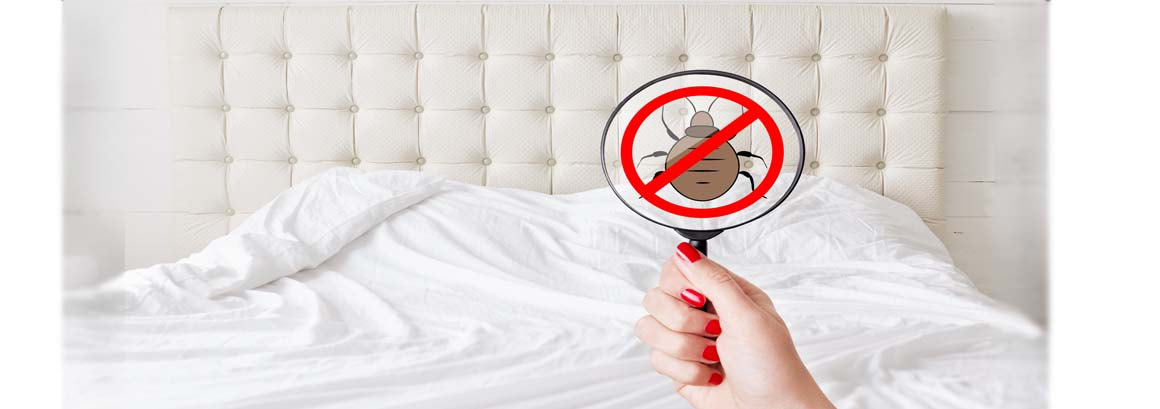 bedbug slide