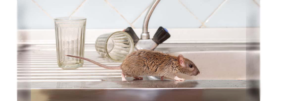 rodent slide
