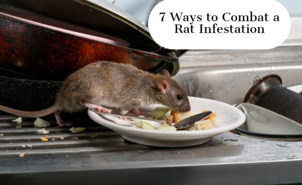 7 Ways to Combat a Rat Infestation