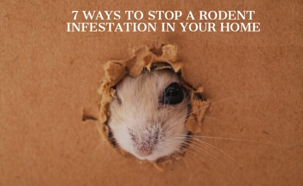 7 WAYS TO STOP A RODENT INFESTATION IN YOUR HOME