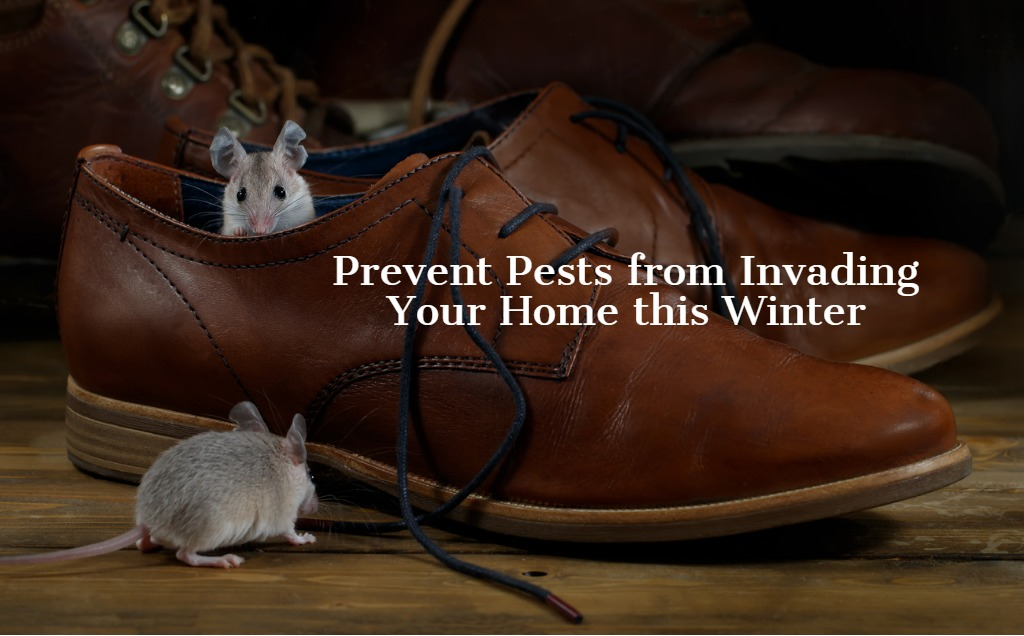 Tips to Prevent a Winter Pest Infestation