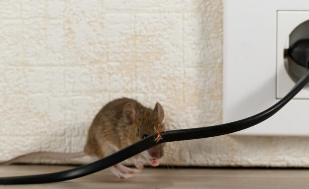 How NOT to Invite Rodents into Your Home