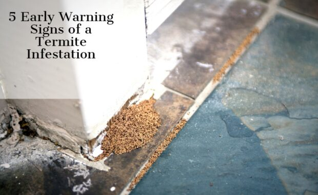 5 Early Warning Signs of a Termite Infestation