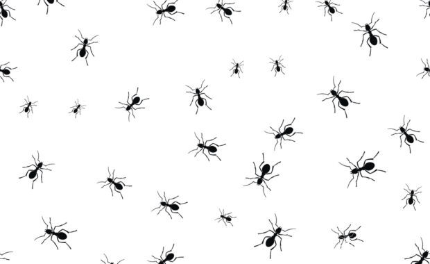 ants group isolated