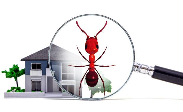 termites or ants?