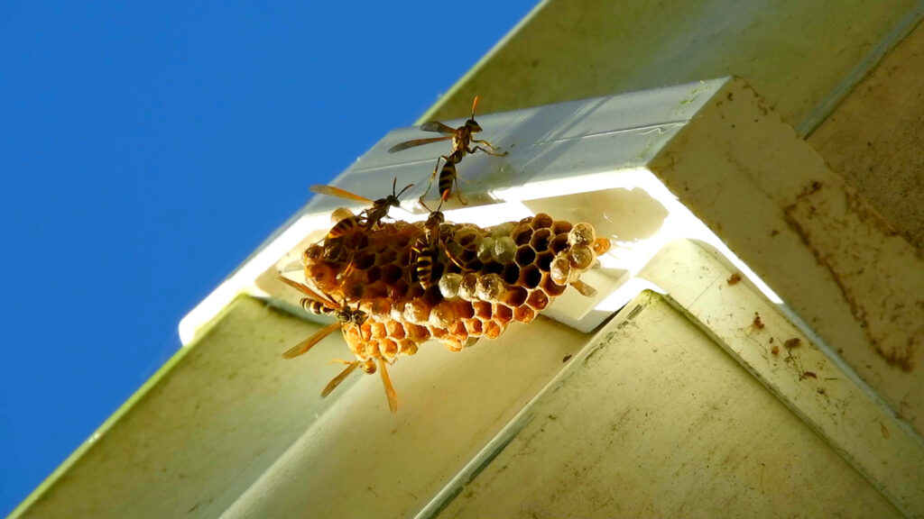 Bee and Wasp Prevention
